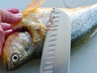تنظيف السمك