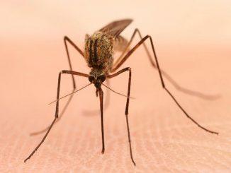 فيروس غرب النيل
